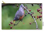 Robin Reaching For Berry Carry-all Pouch