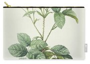 Rosa Centifolia Caryophyllea Carry-all Pouch by Pierre Joseph Redoute