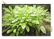 Sage Plant Carry-all Pouch by Elena Elisseeva