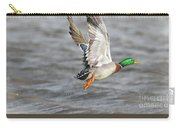 Scared Mallard Drake Carry-all Pouch by Robert Frederick