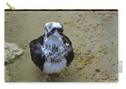 Sea Hawk Standing In Shallow Water Carry-all Pouch