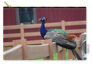 Sitting Peacock Carry-all Pouch