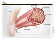 Skeletal Muscle Structure Carry-all Pouch