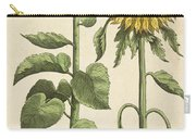 Sunflowers Illustration From Florilegium Carry-all Pouch