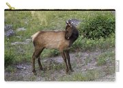 Sweet Elk Calf Carry-all Pouch