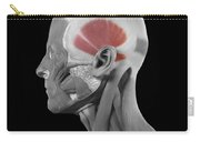Temporalis Carry-all Pouch