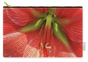 Terra Cotta Amaryllis Carry-all Pouch