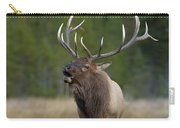 The Challenger Carry-all Pouch by Sandra Bronstein