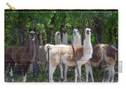 The Five Llamas Carry-all Pouch