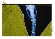 Thecate Hydrozoan Clytia Sp., Lm Carry-all Pouch