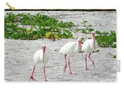 Three White Ibis Walking On The Beach Carry-all Pouch