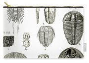Upper Cambrian Trilobites Carry-all Pouch