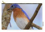 Very Bright Young Eastern Bluebird Perched On A Branch Colorful Carry-all Pouch