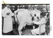 Vets Give Cow A Physical Carry-all Pouch
