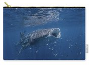 Whaleshark Feeding Carry-all Pouch