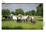 White Lipizzaner Mares Horse Breed With Dark Foals Grazing In A  Carry-all Pouch