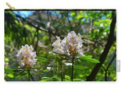 White Rhododendron Blooms Carry-all Pouch