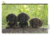 Wire-haired Dachshund Puppies Carry-all Pouch