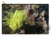 Yellow Feather Star Carry-all Pouch
