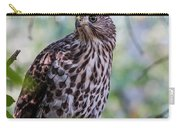 Young Cooper's Hawk Carry-all Pouch
