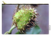Photography Macro Shot Of A Beechnut Carry-all Pouch