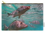 Snapper On Ningaloo Reef, Australia Carry-all Pouch