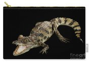 Young Cayman Crocodile, Reptile With Opened Mouth And Waved Tail Isolated On Black Background In Top Carry-all Pouch