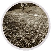 A Run Of Squawfish Stranded In Kelsey Creek Near Kelseyville Lake County April 29 1899 Round Beach Towel