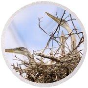 Blue Heron Rookery 7214 Round Beach Towel