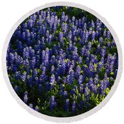 Bluebonnets In The Limelight Round Beach Towel