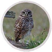 Burrowing Owls - Watching You 3 Round Beach Towel