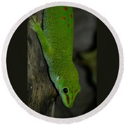 Climbing Giant Day Gecko Round Beach Towel