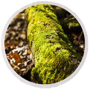 Dead Log With Moss Round Beach Towel