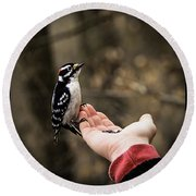 Downy Woodpecker In Hand Round Beach Towel