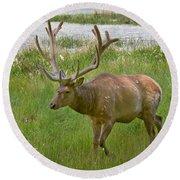 Elk At Pond Edge Round Beach Towel