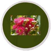 Flowering Gum W Ants Round Beach Towel