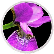 Japanese Iris Violet Black  Round Beach Towel
