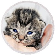 Kitten In A Hand Round Beach Towel