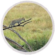 Leopard Cub In Serengeti Round Beach Towel