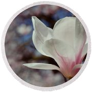 Magnolia Flowers In Spring Time Round Beach Towel