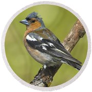 Male Chaffinch Round Beach Towel