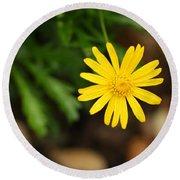 Marguerite Yellow Daisy Round Beach Towel