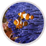 Ocellaris Clownfish Round Beach Towel
