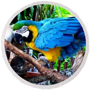 Parrot Greeting Card Round Beach Towel