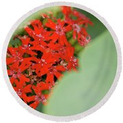 Red Butterfly Buds By Jammer Round Beach Towel