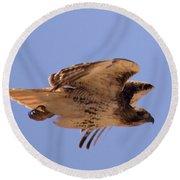 Red Tail Hawk Round Beach Towel