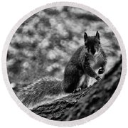 Squirrel In The Park V3 Round Beach Towel