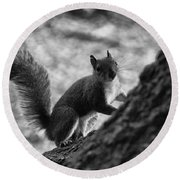 Squirrel In The Park V4 Round Beach Towel