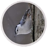 White-breasted Nuthatch Pictures 27 Round Beach Towel