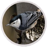 White-breasted Nuthatch Pictures 35 Round Beach Towel